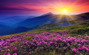 mountains-azalea-sunset